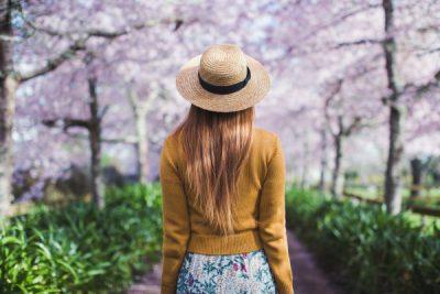 浪漫怀卡托樱花节 英式庄园 赏春踏青休闲好去处