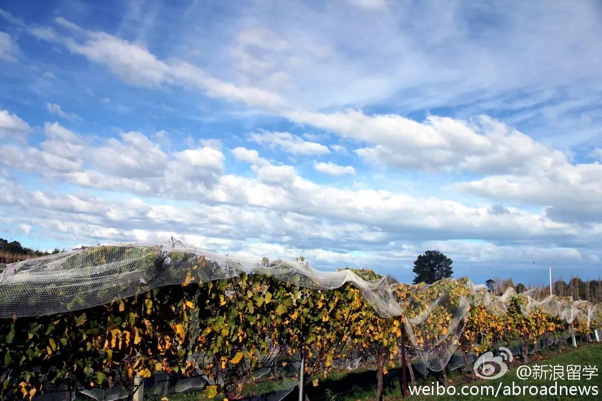 【南岛优质院校】林肯大学:土地为本,南半球第一的农业大学