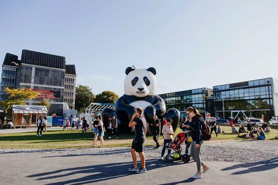 高考or留学?留学新西兰最真实的学生经验分享!